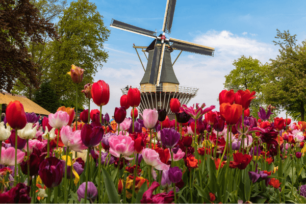 enjoy tulip time!